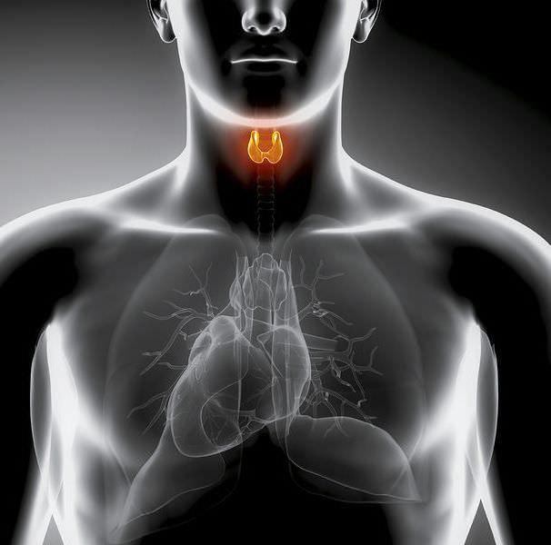 Причины и лечение папиллярного рака