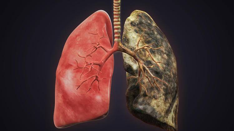 Образование в дыхательной системе