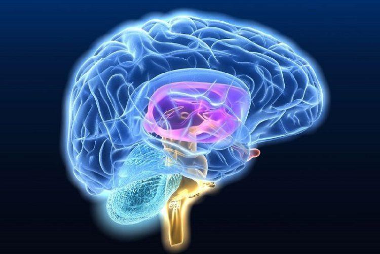 Болезнь мозга